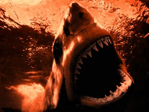 sharktank image
